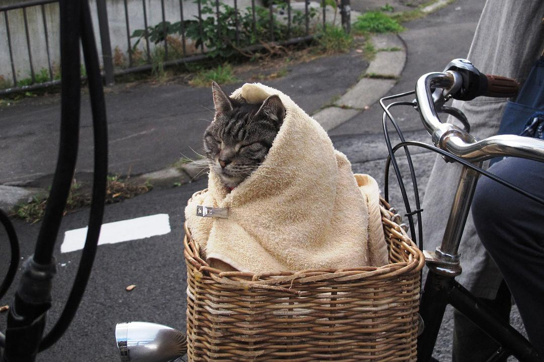 日本电影《假如猫从世界上消失了》百度云网盘
